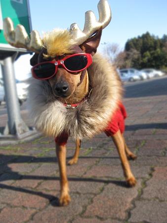 クリスマス犬1号