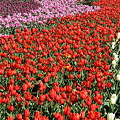Photos: 花の流れ