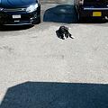 Photos: 早朝洗車1