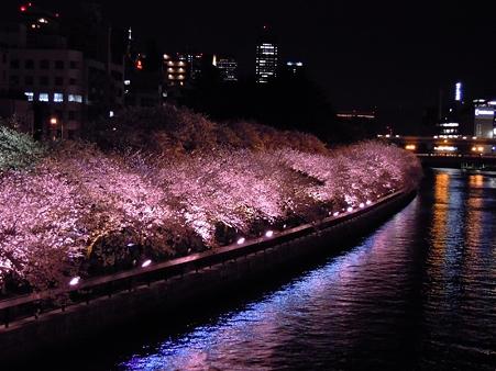 夜桜2010_01
