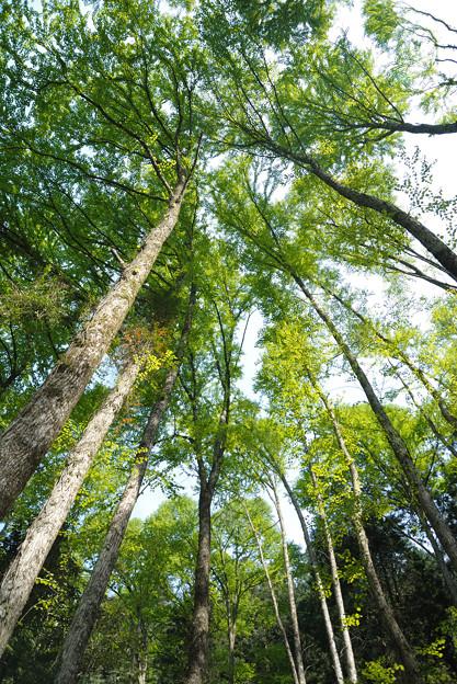 のびてゆく木々