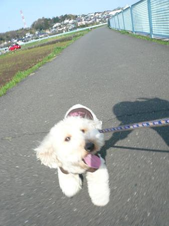100406 花見散歩 2