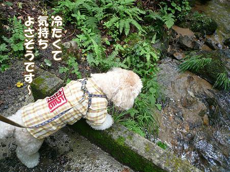 岩手 不動の滝 10