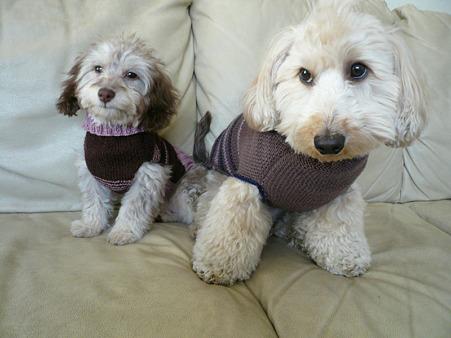 2ワンでセーター 5