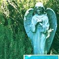Photos: Angel