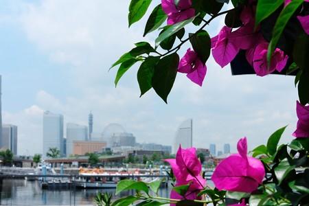 2014.07.01 みなとみらい BLUE BLUE YOKOHAMA ブーゲンビリア