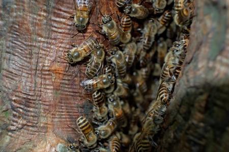 2014.07.08 追分市民の森 ミツバチ