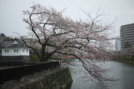 2010.04.01 雨の小田原城