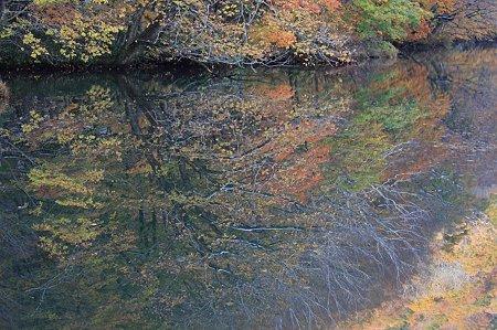 2010.10.28 蔦温泉 蔦沼 沼面へ紅葉