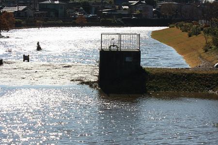 2010.12.03 和泉川 朝方の豪雨で散歩広場水没