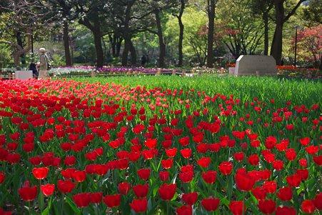 2011.04.15 横浜公園 チューリップまつり-11
