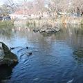 Photos: 神池