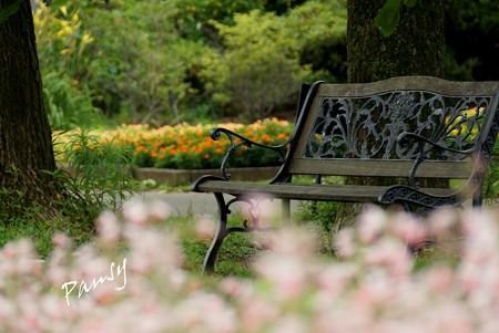 夏の日のベンチ・・