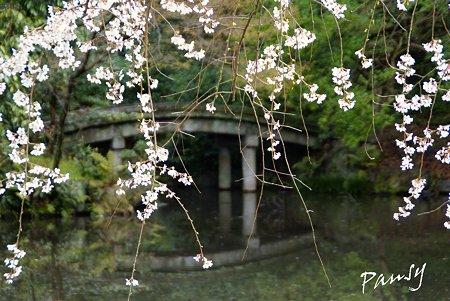 石橋と・・ しだれ桜・・4 京都御苑 2010