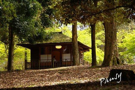 奈良公園にて・・