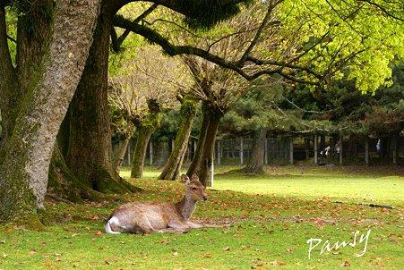 鹿のいる風景・・