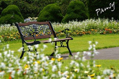 花に囲まれたベンチ・・