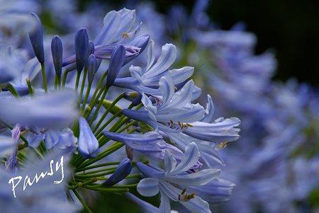 爽やかな青紫・・