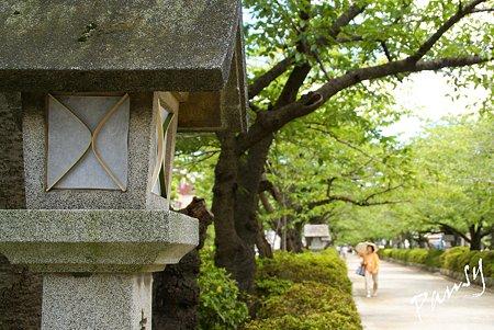鎌倉 街かど・・1