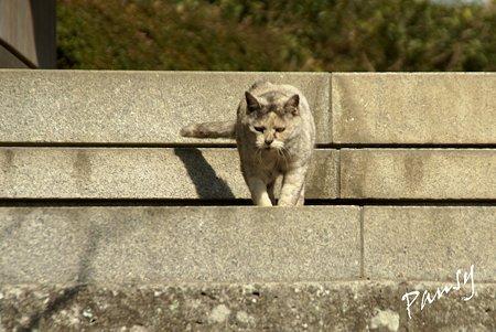 gray の猫・・浄妙寺5
