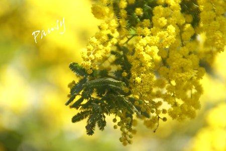 yellow in yellow..