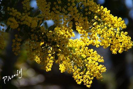 春色の光・・