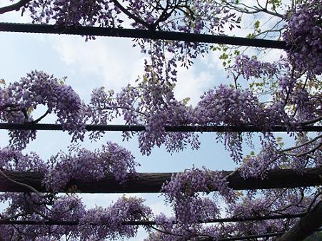 2010年04月30日渋川公園05