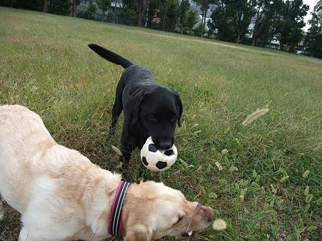 「ボールは離しまへんで~」by悟天