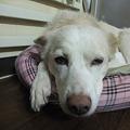 写真: ボクは眠いねん・・・