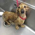 Photos: Re:Startの保護犬
