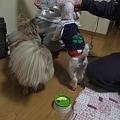 Photos: お水待ちの2頭