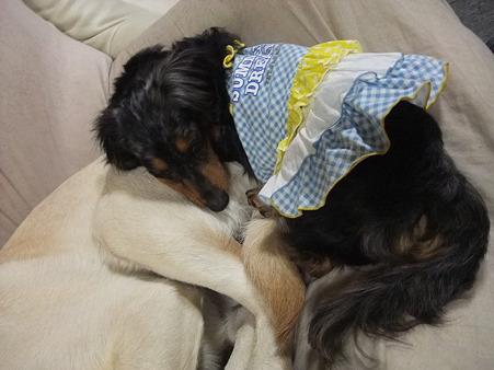 紫音のお尻を枕にする女