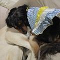 Photos: 紫音のお尻を枕にする女
