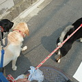 Photos: 一緒に散歩