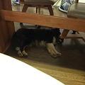Photos: 机の下で寝むっちゃいました^^