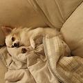 Photos: 安心して寝ています