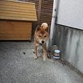 Photos: そこにおったんか?!
