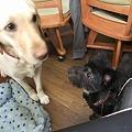 Photos: 犬社会の