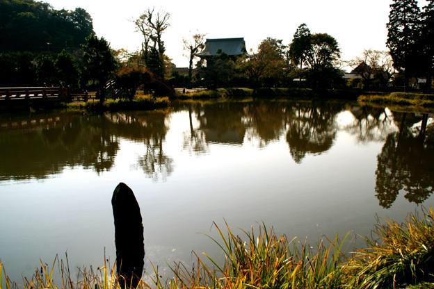 写真: 称名寺の晩秋風景!(111123)