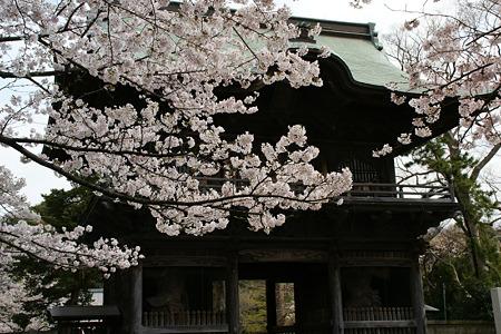 桜の花見、称名寺の仁王門!(100403)