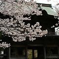 Photos: 桜の花見、称名寺の仁王門!(100403)