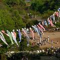 Photos: 山にも鯉のぼり!
