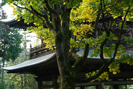 山門に黄葉のプラタナス!(101106)