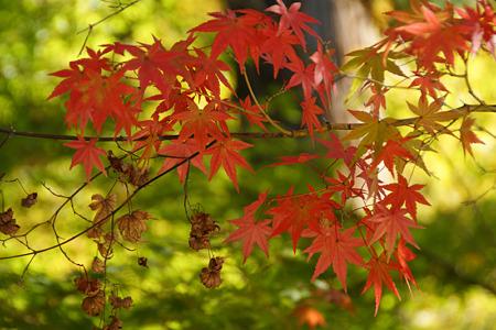 淡色の紅葉狩り!(101106)