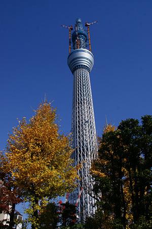 東京スカイツリー黄葉!(20101218)