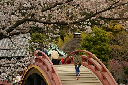 太鼓橋の桜風景!(110410)