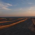 Photos: 堆砂垣の列