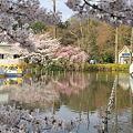 Photos: 100404-5井の頭公園