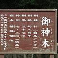 Photos: 100515-119霧島神宮の御神木1