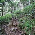 写真: 100721-66蝶ヶ岳登山・蝶ヶ岳への道